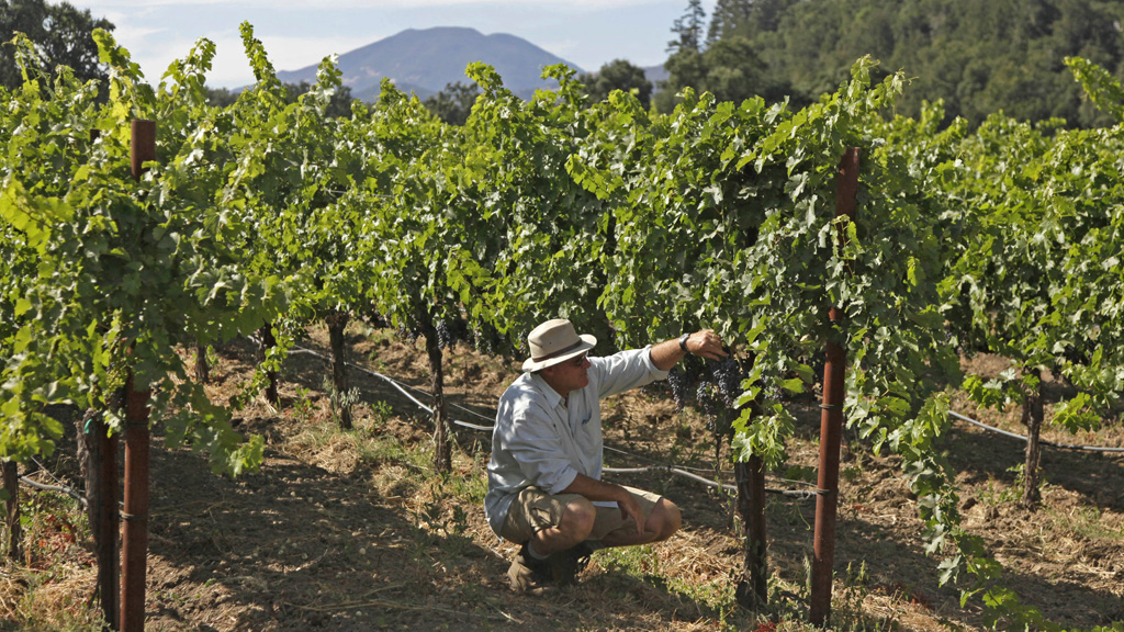 Wine Country Growers Boost Research to Combat Climate Change